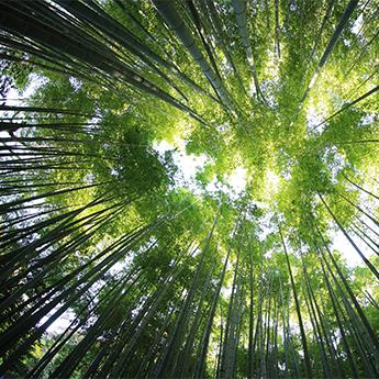 森林複方純精油